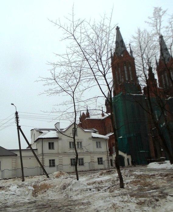 Варварство по-смоленски или вырубленные у костёла каштаны