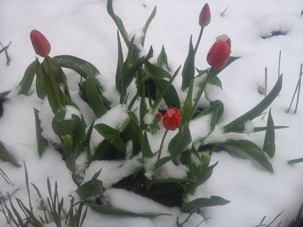 Как же мы соскучились по майскому снегу!