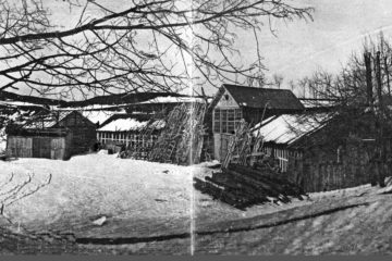 Массовое поле в начале XX века